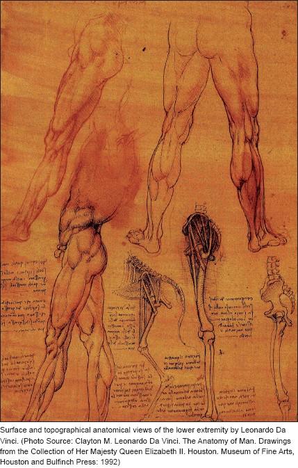 Medical Illustration Art In Medical Education Hajar R Heart Views