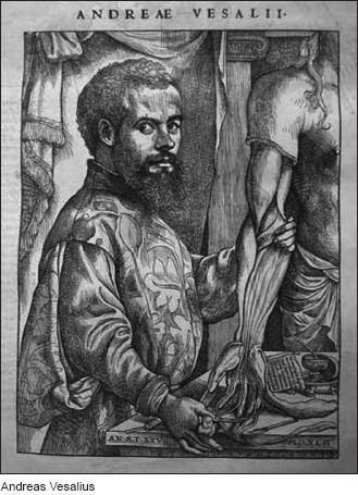 He Showed How Anatomical Dissection Could Be Used To Test Speculation And Underlined The Importance Of Understanding Structure Body In Medicine