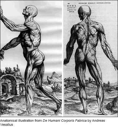 Through His Dissections Vesalius Realized That Many Of Galens Anatomical Descriptions Were Incorrect Because Galen Extrapolated Animal Dissection